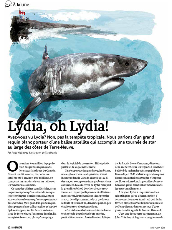 Article image with illustration of Lydia the Great White Shark