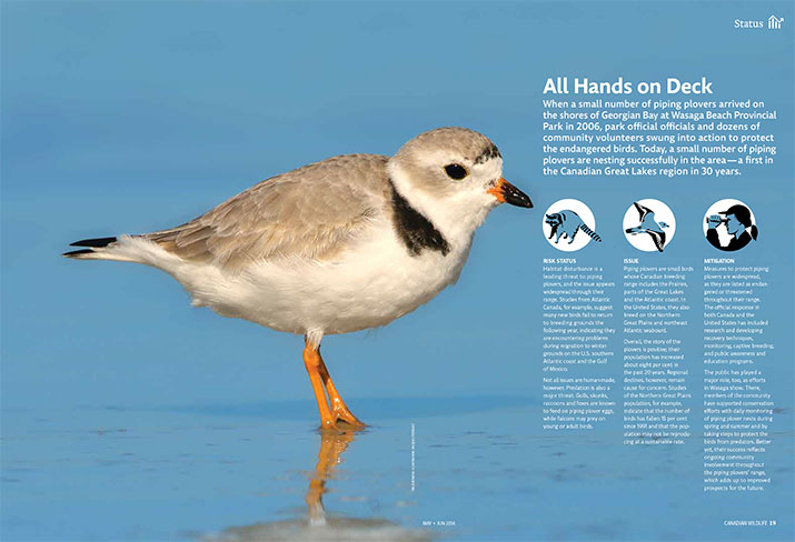 Status report of the piping plover