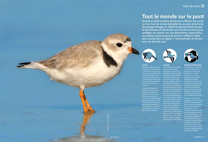 Status report on the Piping Plover