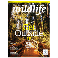 May June 2014 Canadian Wildlife Magazine Cover