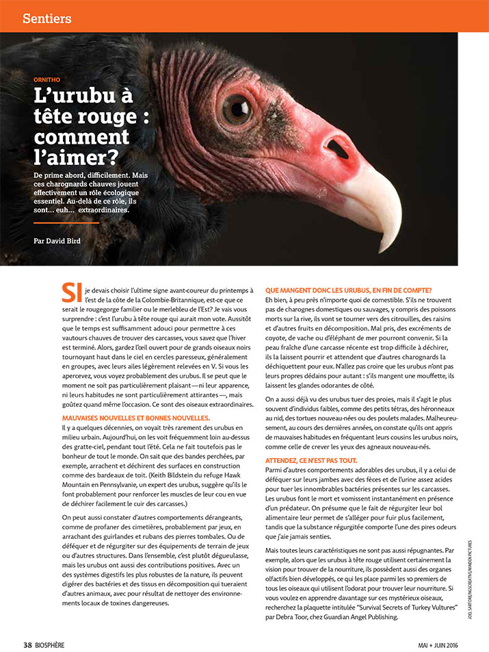 Article image with photo of a vulture