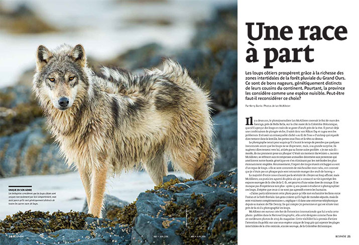 Biosphere Magazine Article Feature A Breed Apart Wolf