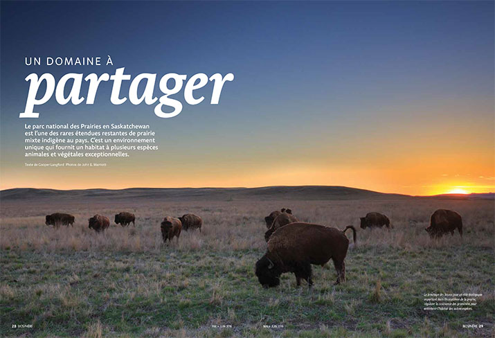 Biosphere Magazine Article Feature Home on the Range Bison