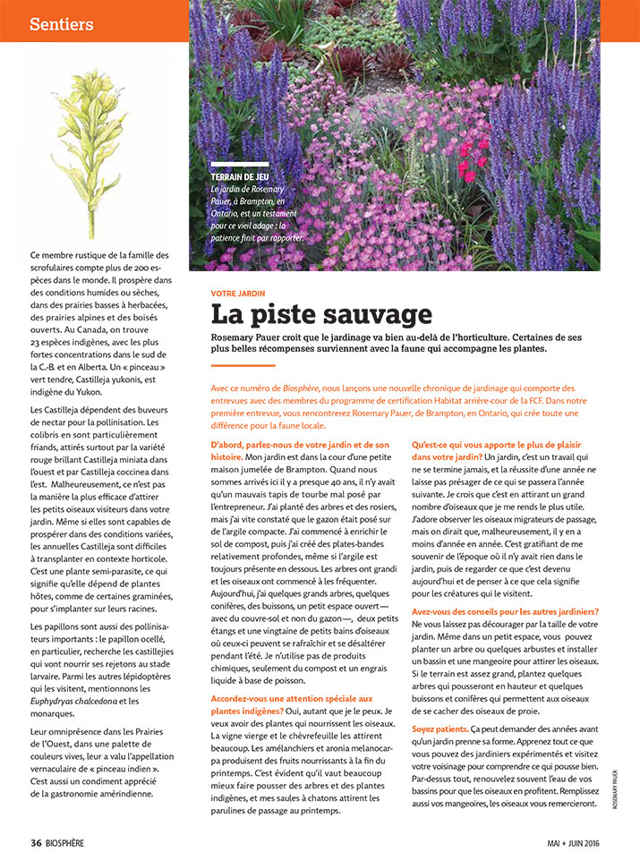 Article image with photo of wild garden