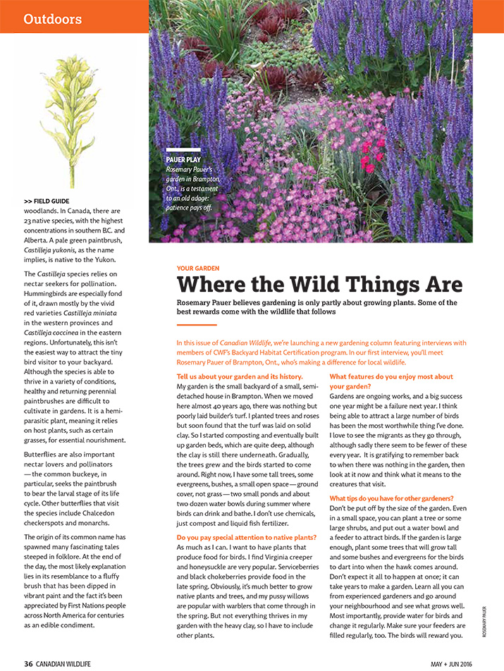 Article image with photo of wild flower garden