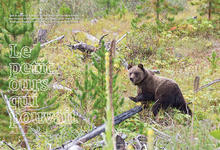Biosphere November December 2014 Feature Little Bear