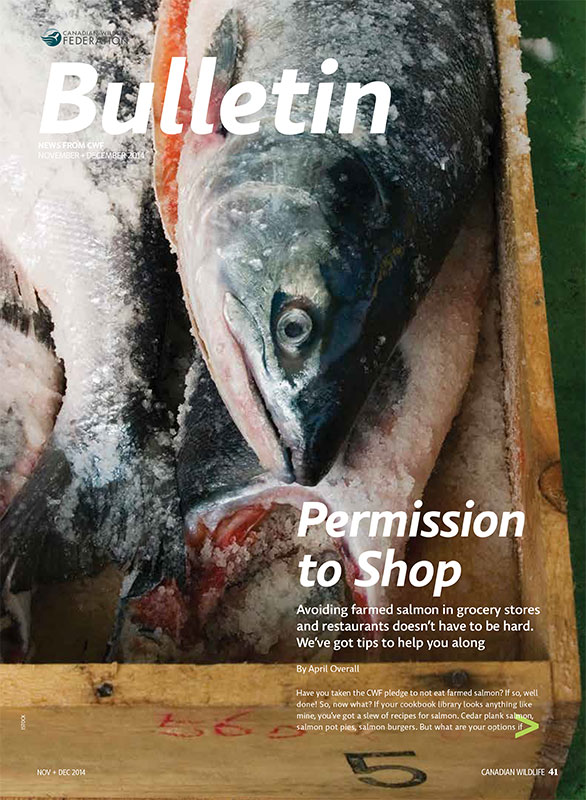 Bulletin cover with fish photo