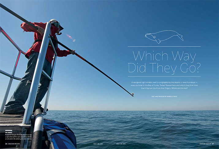 Canadian Wildlife November December 2014 Feature Which Way