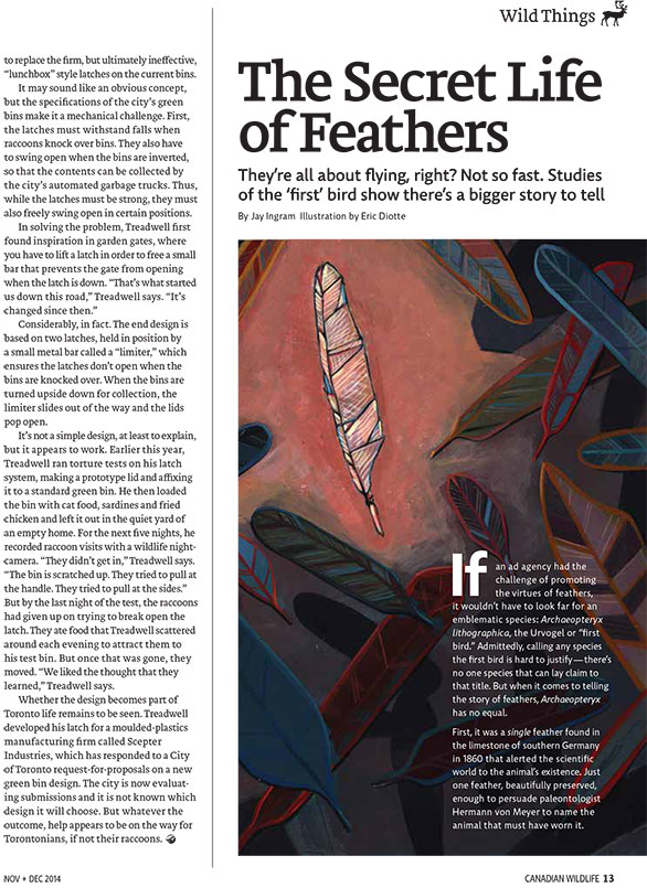 Article image with illustration of feather