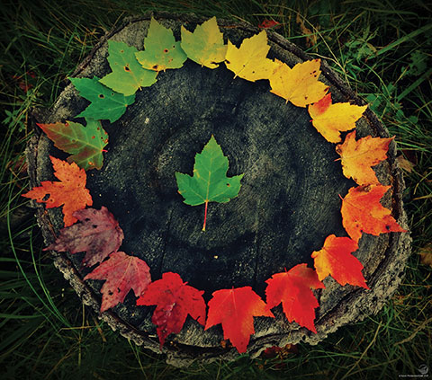Colourful leaves arranged in a circle on a tree stump