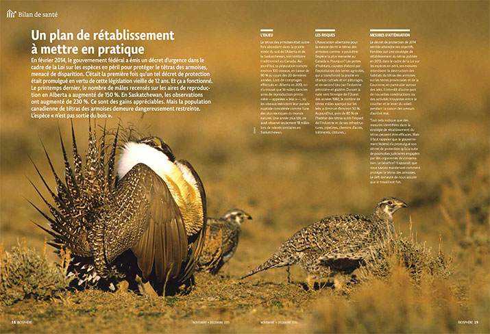 Status report on the Sage Grouse