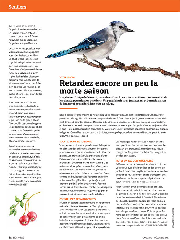 Article image with blue jay illustration