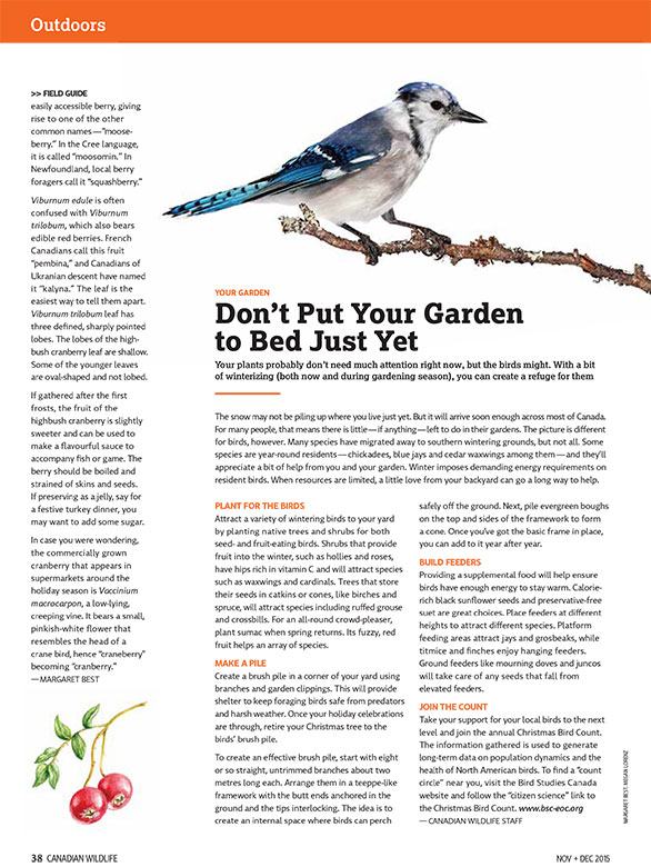 Article image with illustration of blue jay