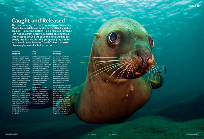 Canadian Wildlife Sept Oct 2014 Status Stellar Sea Lion