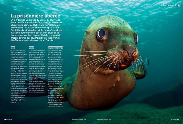 Status report on Stellar Sea Lions