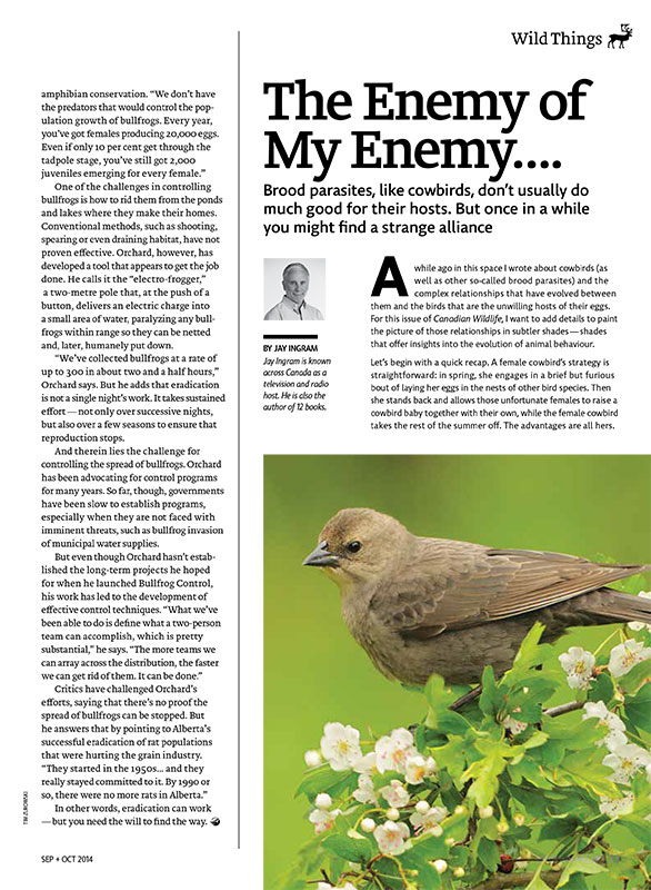 Article image with a photo of a bird