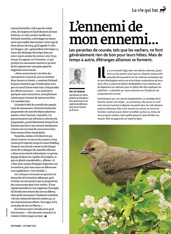Article image with photo of a bird on a branch
