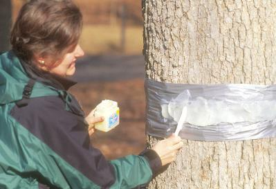 Image of woman treating a tree with Cankerworms