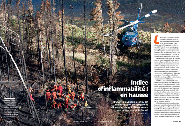 Article image with image of forest fire
