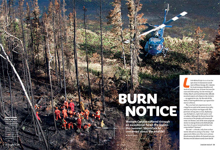 Article image with photo of burning forest