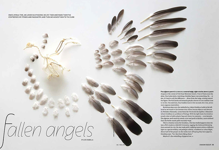 Canadian Wildlife July August 2014 Feature Story Fallen Angels