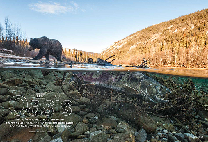 Canadian Wildlife July August 2014 Feature Story The Oasis