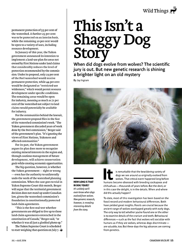 Article image with photo of shaggy dog