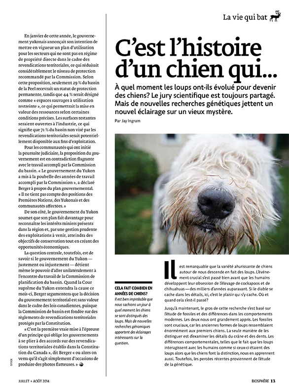 Article image with photo of a dog's face close up