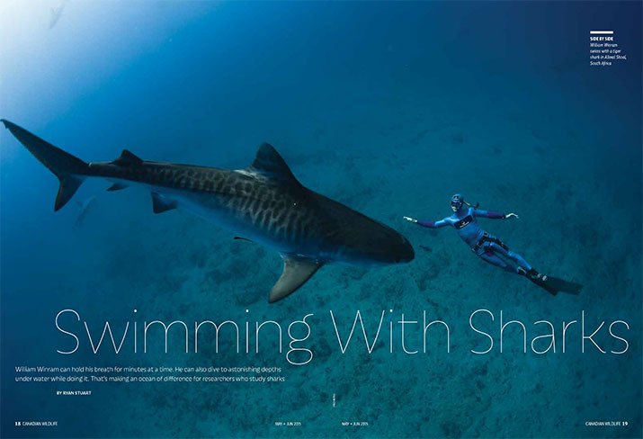 CW MJ2015 Feature Swimming with Sharks