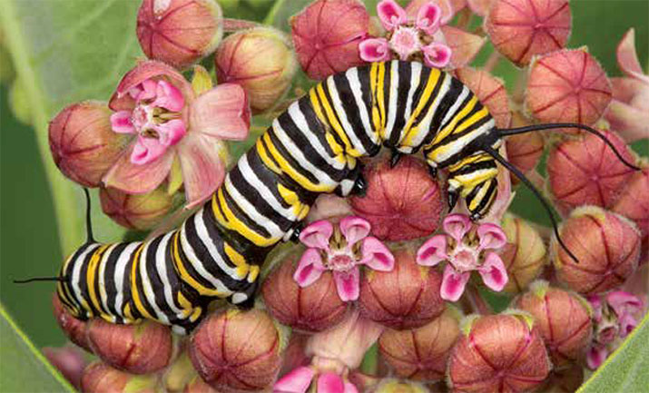 Catepillar on a flower