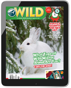 Tablet showing WILD magazine cover