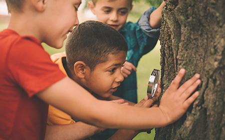 kids exploring tree trunk
