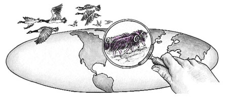 Illustration of world with a magnifying glass on bison