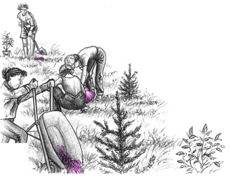 Illustration of people planting trees