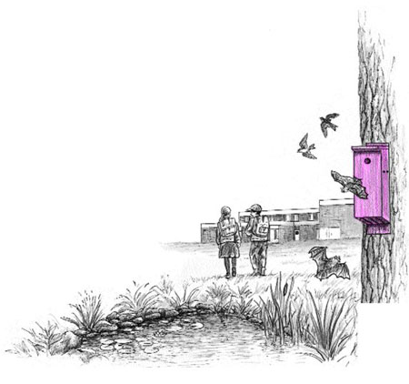 Bats and birds using bat and bird box illustration