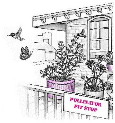 Potted pollinator plants