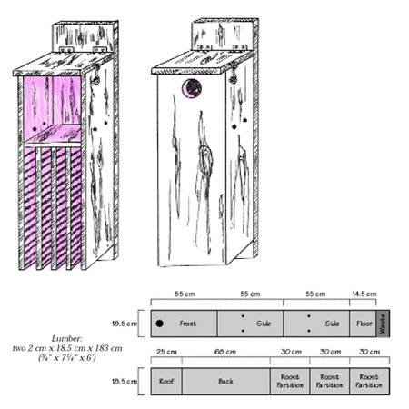 Illustration of a combination bird and bat box