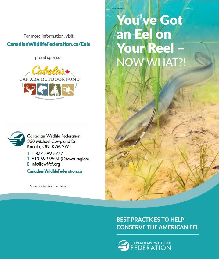 Best Practices When Catching an Eel cover