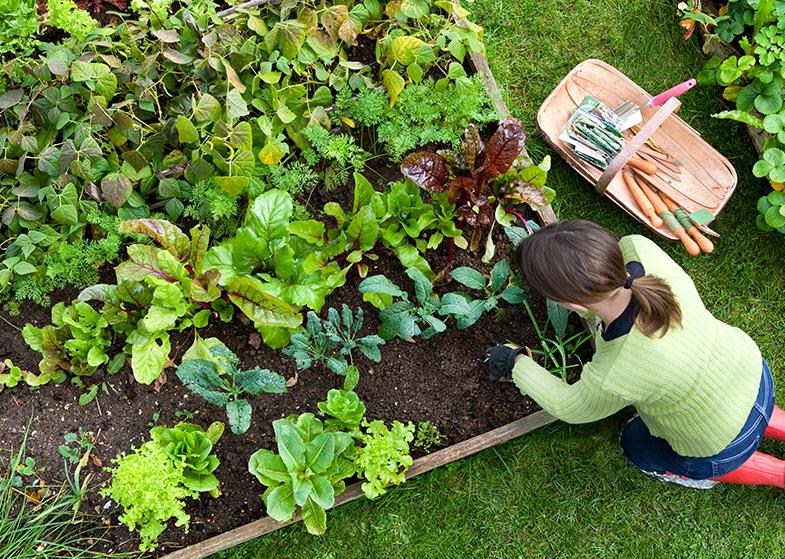 gardening large vegetable garden