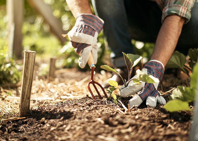 gardening tools dirt
