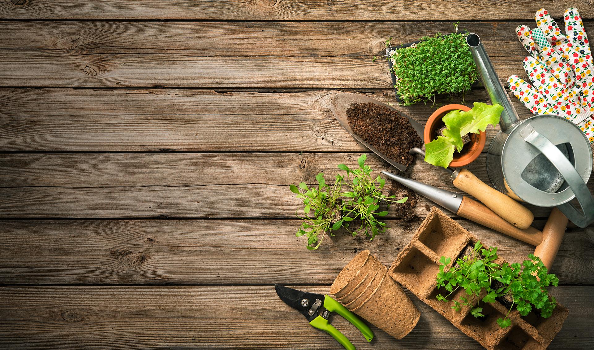 gardening tools plants