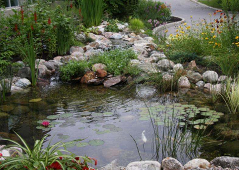 pond garden road