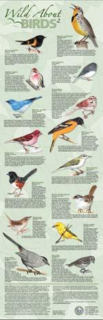 Wild About Birds 2