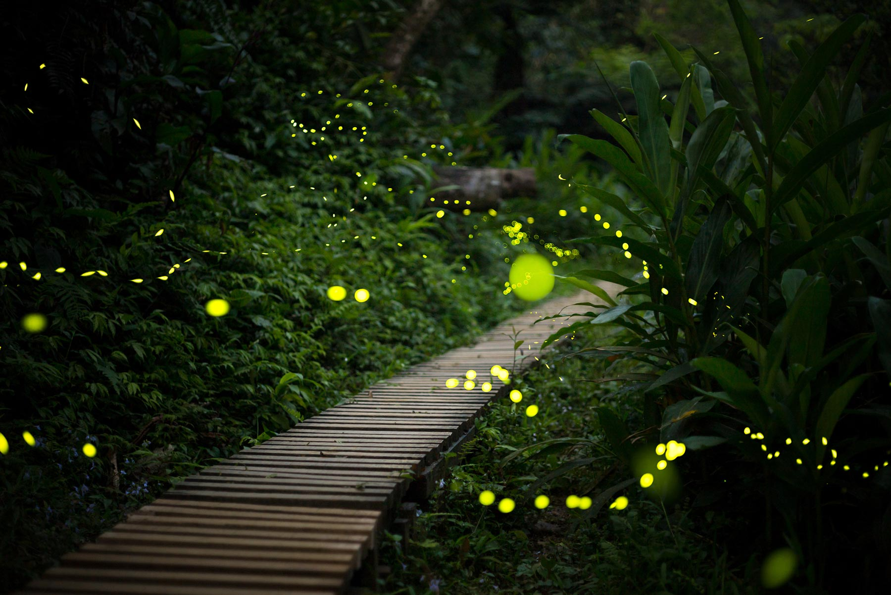 fireflies in a garden