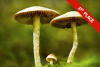 Haymakers Mushrooms Photo by Marianna Armata