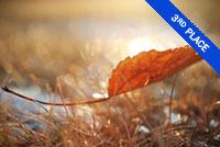 Fall Leaf Photo by Victor Liu