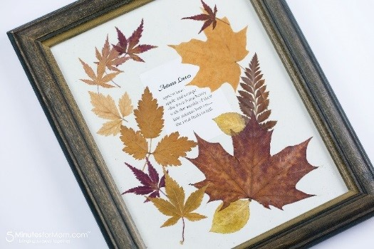 Pressed leaves in a frame
