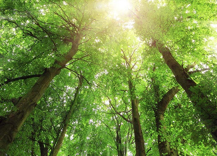 forest bathing green trees