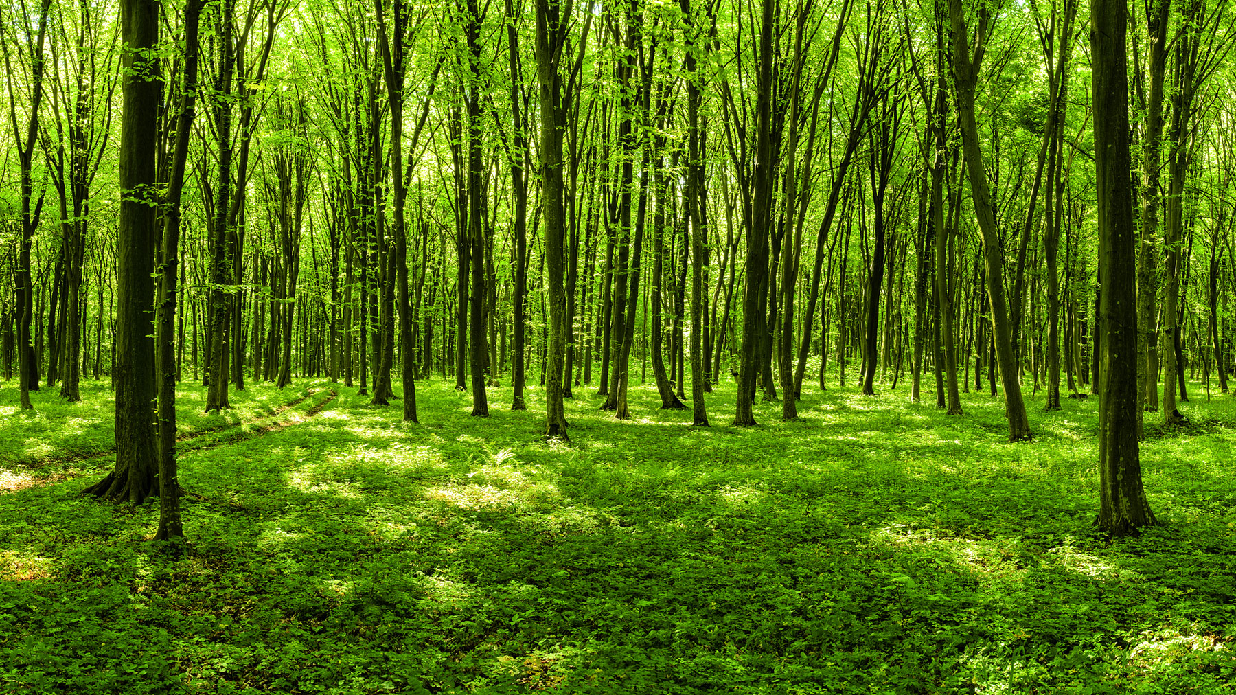 green trees forest