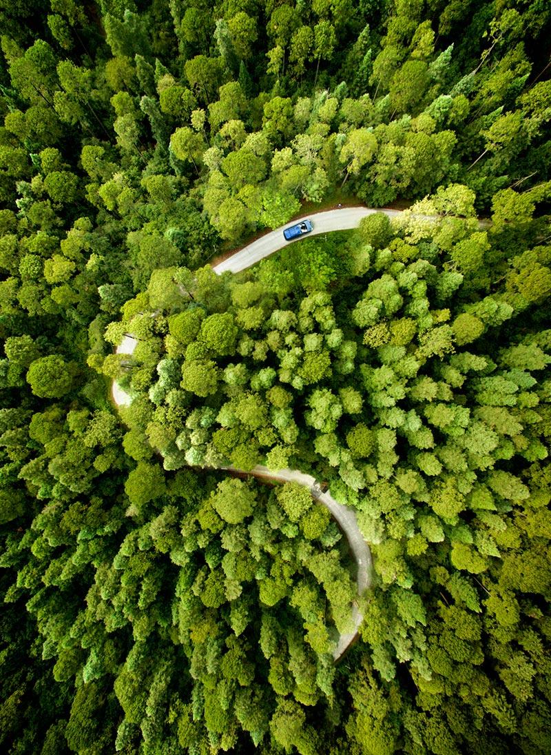 forest-road-trees-vert-aerial.jpg